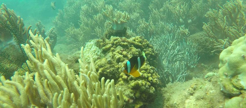 cham islands snorkeling tour