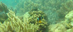 cham islands snorkeling tour