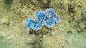 cham island coral